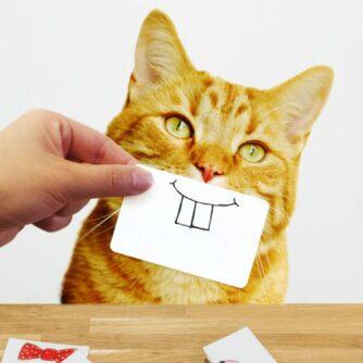 Cat snaps met kat