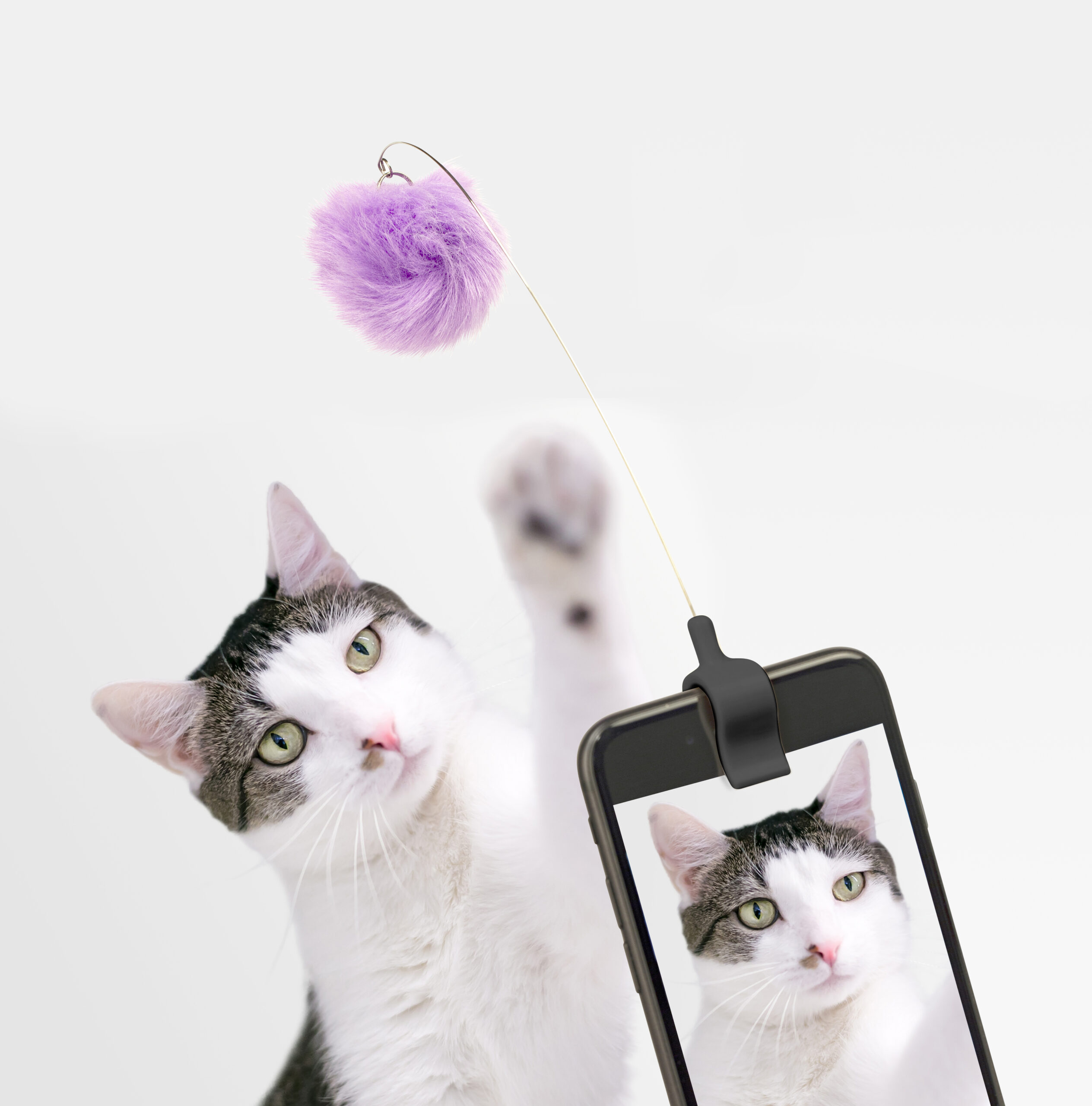 Kitty Phone Clip
